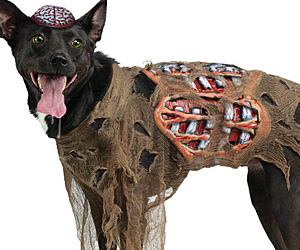 How to Make a Zombie Halloween Costume |Diy Zombie Dog Costumes
